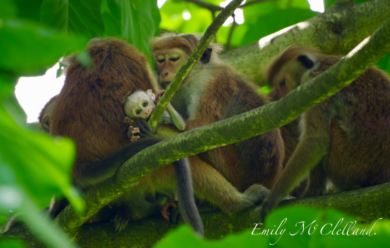 Monkeys in the Botanical Garden