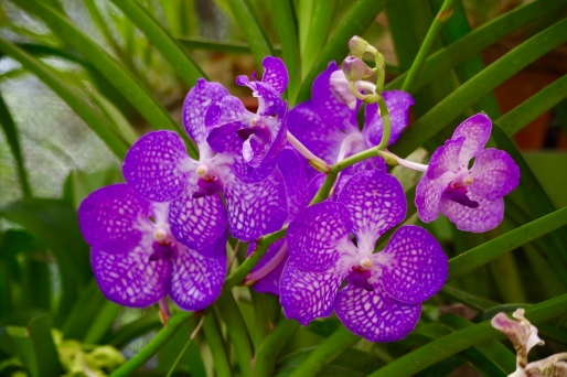 Orchids in the gardens